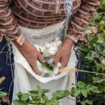 sustainable fashion changing the world - 1 1 150x150 - A #Curated list of 20 Interesting Facts on Sustainable Fashion Changing the World! sustainable fashion changing the world - 1 1 150x150 - A #Curated list of 20 Interesting Facts on Sustainable Fashion Changing the World!