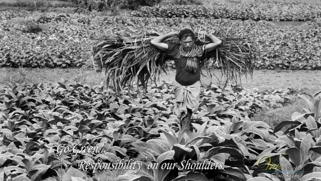 world photography day - World Photography Day 2019 43 - Jediiians frame Slices of Life on World Photography Day 2019 | JD Institute
