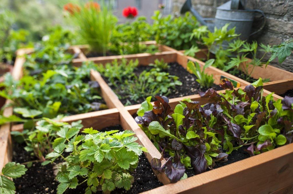 organic terrace farming - Terrace Garden4 1024x681 1 - ORGANIC TERRACE FARMING – THE KEY TO SELF-SUSTENANCE