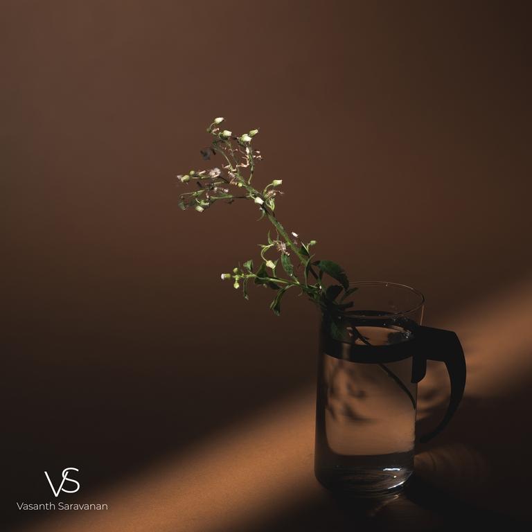 department of photography - product shoot - An eminent alumnus from the Department of Photography – Vasanth Saravanan