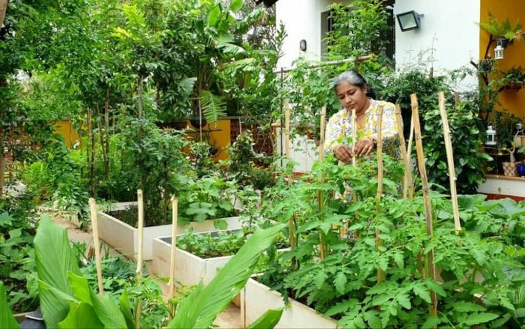 MY GARDEN STORY – BE THE CHANGE, JOIN THE GREEN REVOLUTION! my garden story - Home Garden - MY GARDEN STORY – BE THE CHANGE, JOIN THE GREEN REVOLUTION!