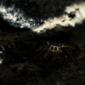 FRIENDS IN YOUR GARDEN - A WORLD ENVIRONMENT DAY CELEBRATION friends - Jumping Spider 300x300 - FRIENDS IN YOUR GARDEN – A WORLD ENVIRONMENT DAY CELEBRATION