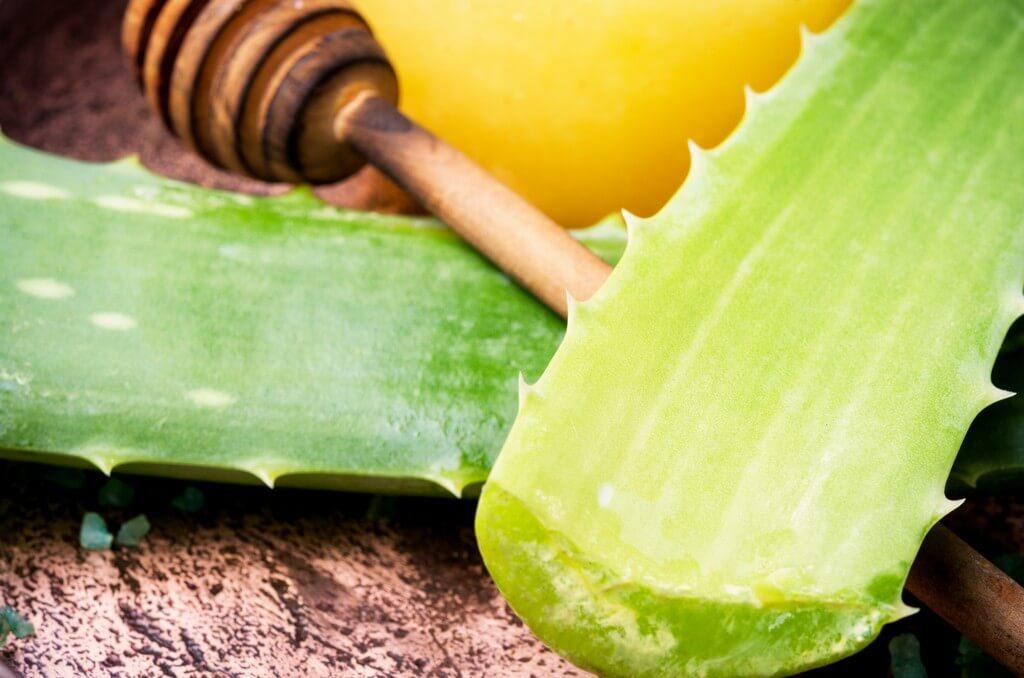Aloe Vera and Neem: Nature's favorite skincare combination neem - Aloe Vera and Neem Natures favorite skincare combination 5 - Aloe Vera and Neem: Nature's favorite skincare combination