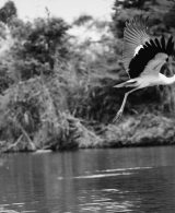 World Photography Day – The Slice of Life in Black and White