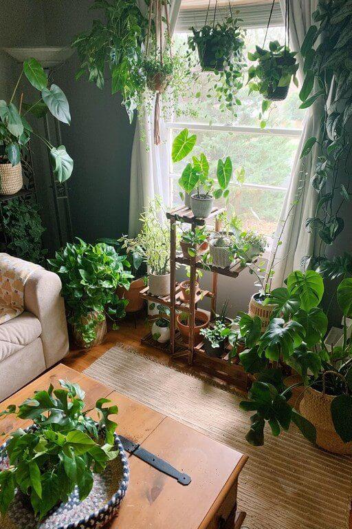 Indoor plants: Simple design hacks to decorate indoors indoor plants - Indoor plants Simple design hacks to decorate indoors 1 512x768 - Indoor plants: Simple design hacks to decorate indoors