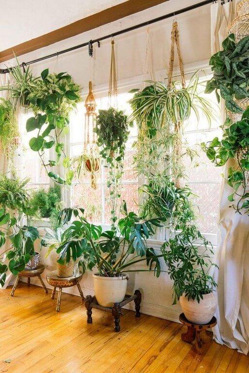 Indoor plants: Simple design hacks to decorate indoors indoor plants - Indoor plants Simple design hacks to decorate indoors 2 - Indoor plants: Simple design hacks to decorate indoors