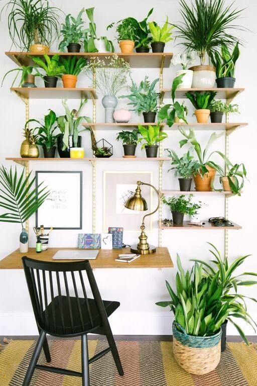 Indoor plants: Simple design hacks to decorate indoors indoor plants - Indoor plants Simple design hacks to decorate indoors 3 512x768 - Indoor plants: Simple design hacks to decorate indoors