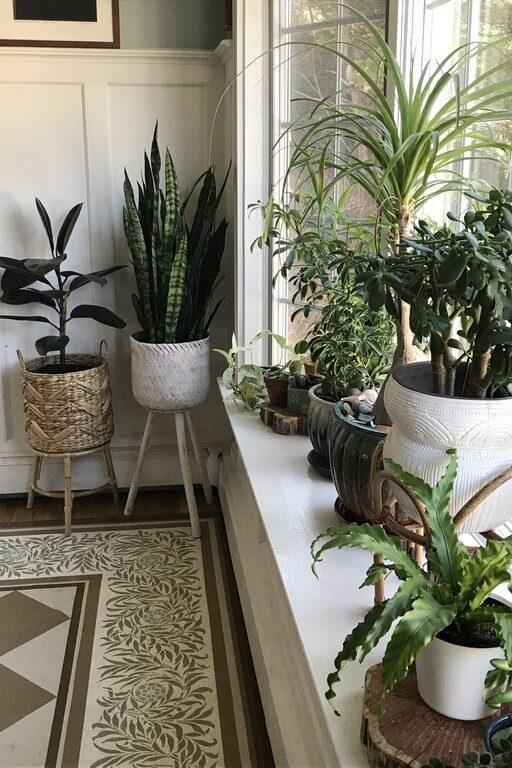 Indoor plants: Simple design hacks to decorate indoors indoor plants - Indoor plants Simple design hacks to decorate indoors 5 512x768 - Indoor plants: Simple design hacks to decorate indoors