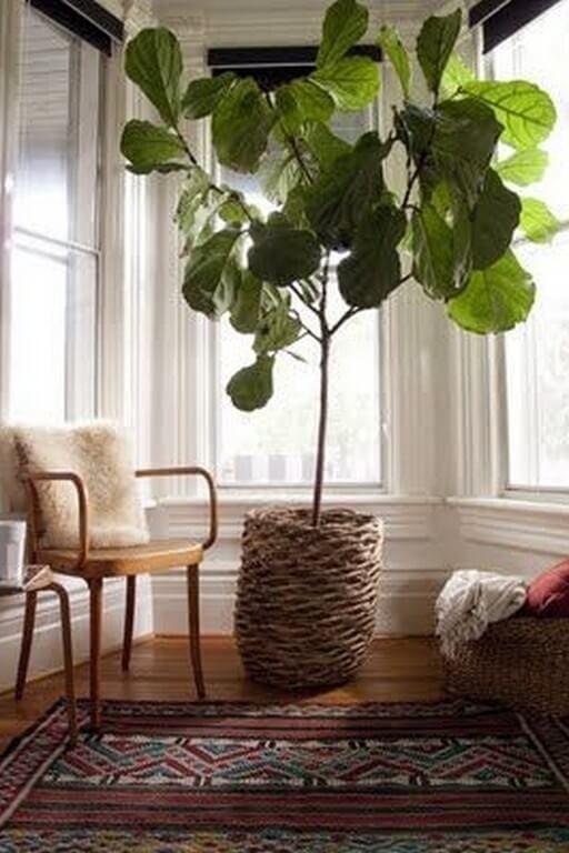 Indoor plants: Simple design hacks to decorate indoors indoor plants - Indoor plants Simple design hacks to decorate indoors 6 512x768 - Indoor plants: Simple design hacks to decorate indoors