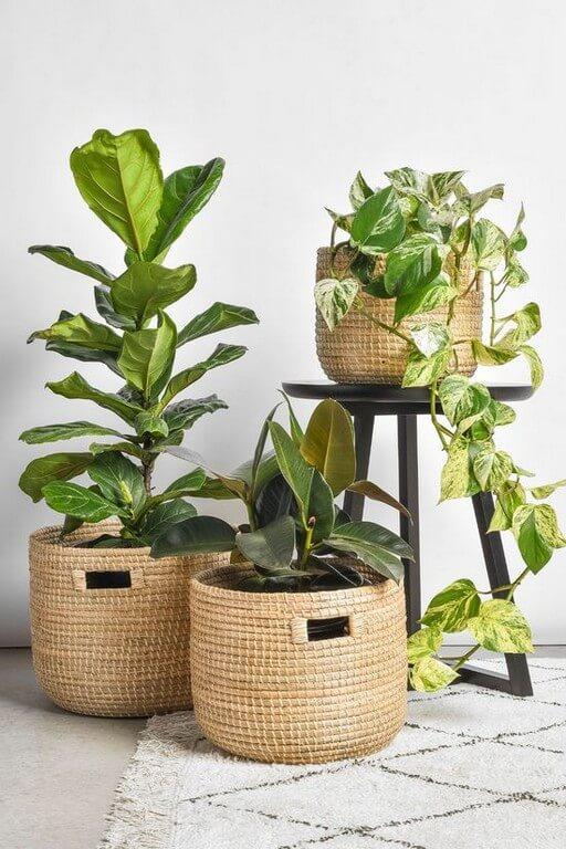 Indoor plants Simple design hacks to decorate indoors indoor plants - Indoor plants Simple design hacks to decorate indoors 8 - Indoor plants: Simple design hacks to decorate indoors