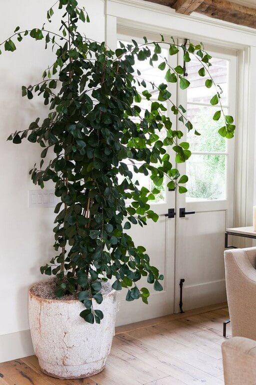 Indoor plants Simple design hacks to decorate indoors indoor plants - Indoor plants Simple design hacks to decorate indoors 9 - Indoor plants: Simple design hacks to decorate indoors