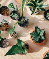 Indoor plants: Simple design hacks to decorate indoors