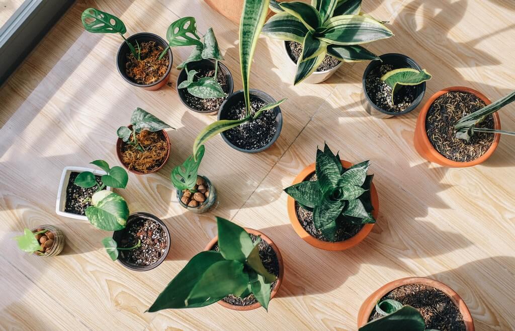 Indoor plants: Simple design hacks to decorate indoors indoor plants - Indoor plants Simple design hacks to decorate indoors Thumbnail - Indoor plants: Simple design hacks to decorate indoors