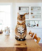 Interior design ideas for a pet-friendly home
