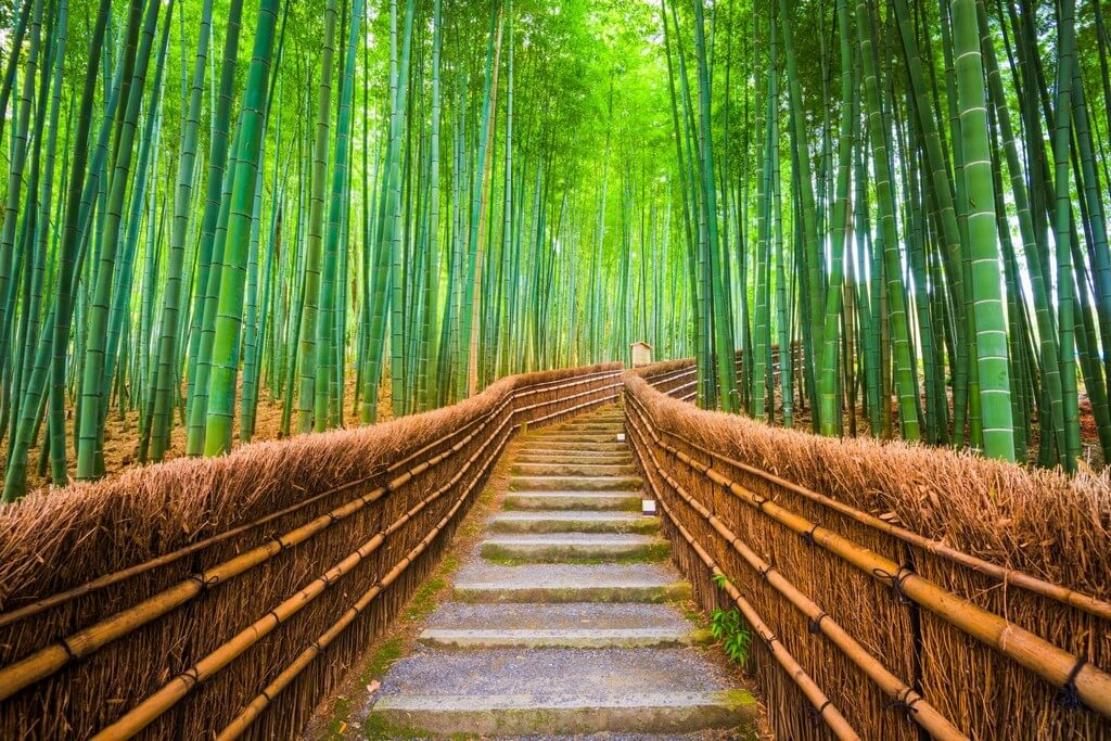 World Bamboo Day: A Core Material of Design World  world bamboo day - World Bamboo Day A Core Material of Design World 1 - World Bamboo Day: A Core Material of Design World