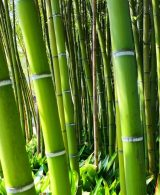 World Bamboo Day: A Core Material of Design World