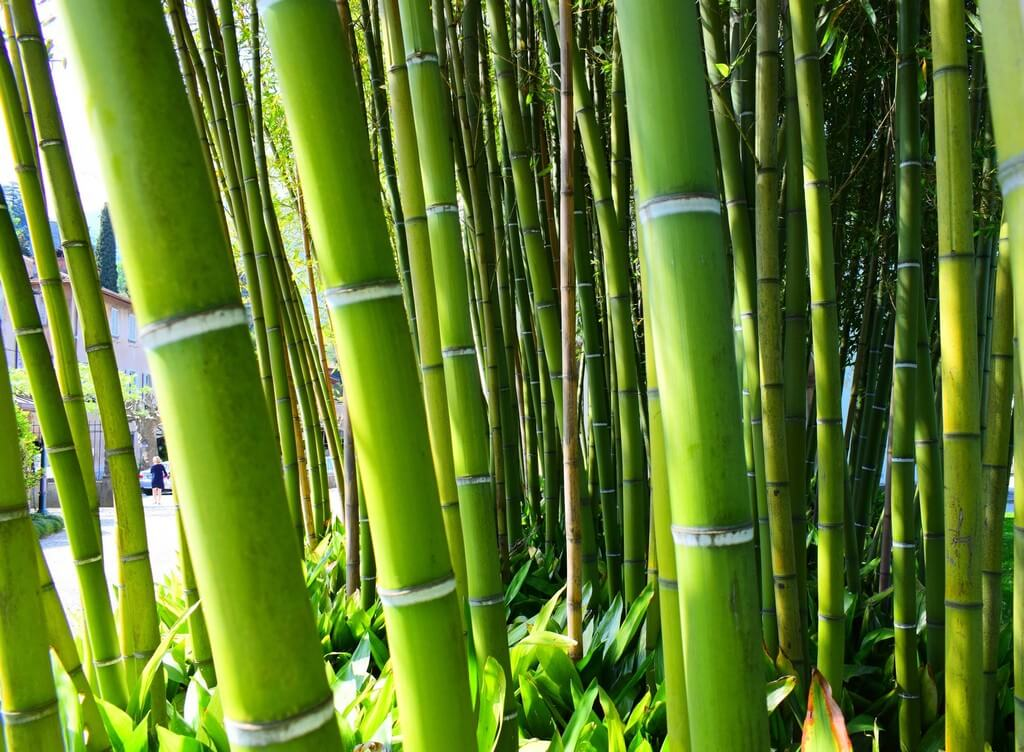 World Bamboo Day: A Core Material of Design World world bamboo day - World Bamboo Day A Core Material of Design World 2 - World Bamboo Day: A Core Material of Design World