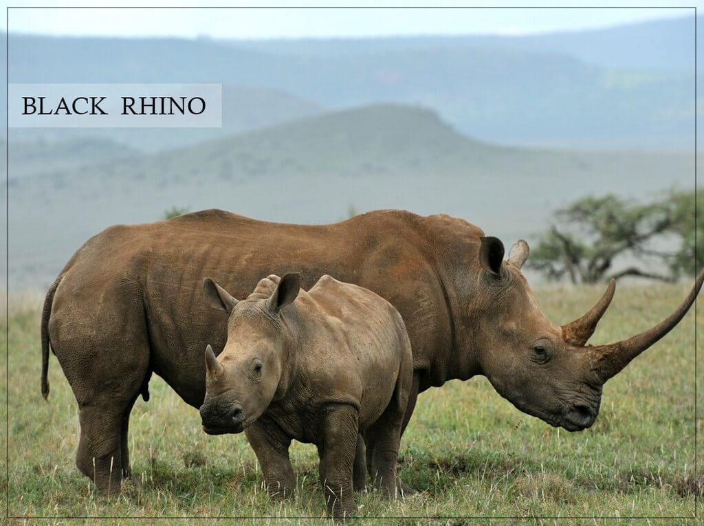 World Rhino Day  world rhino day - World Rhino Day 1 - World Rhino Day
