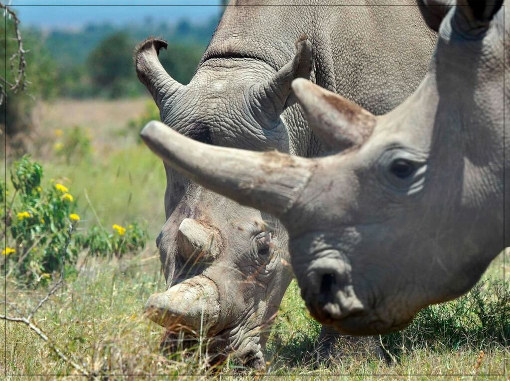 World Rhino Day  world rhino day - World Rhino Day 2 - World Rhino Day