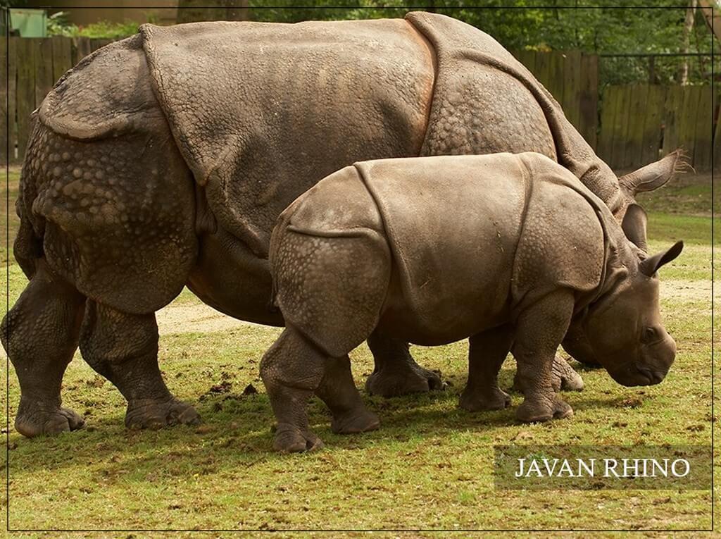 World Rhino Day  world rhino day - World Rhino Day 3 - World Rhino Day