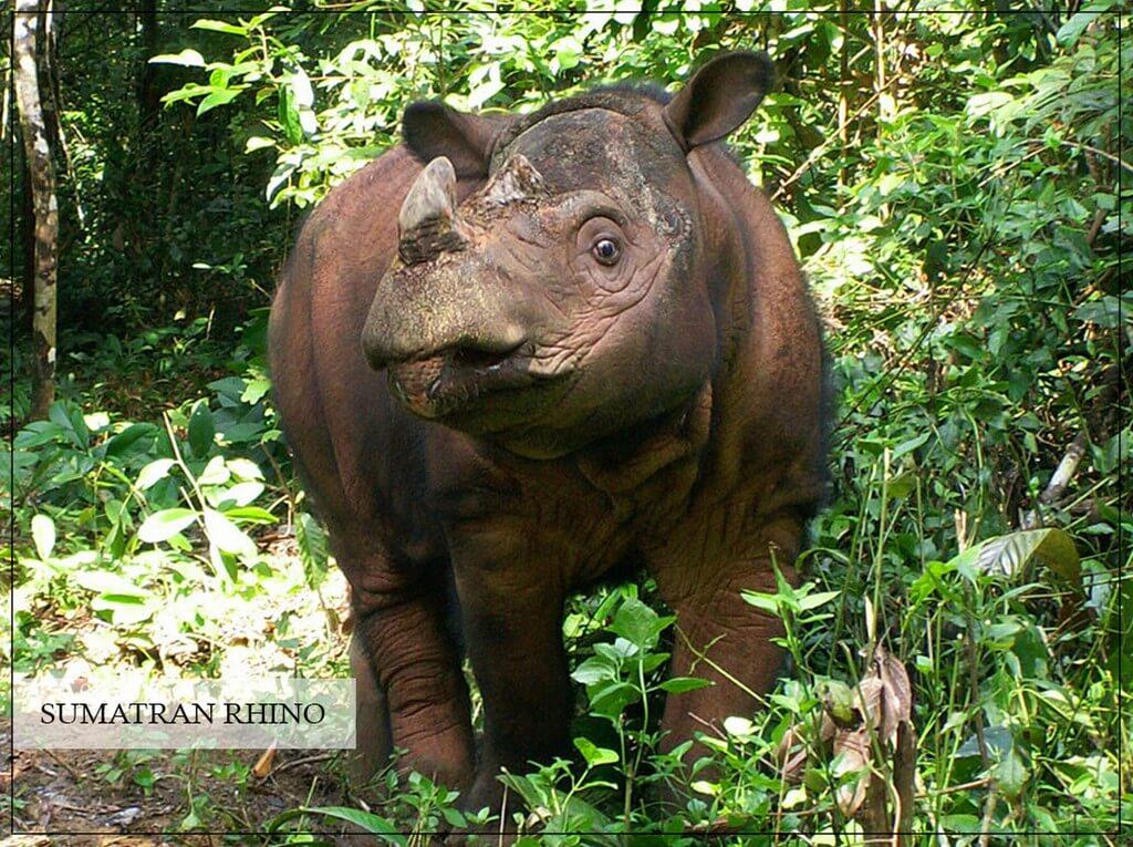 World Rhino Day  world rhino day - World Rhino Day 4 - World Rhino Day
