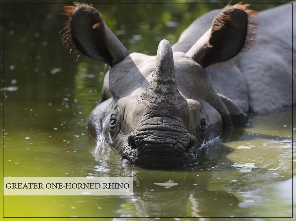 World Rhino Day  world rhino day - World Rhino Day 5 - World Rhino Day