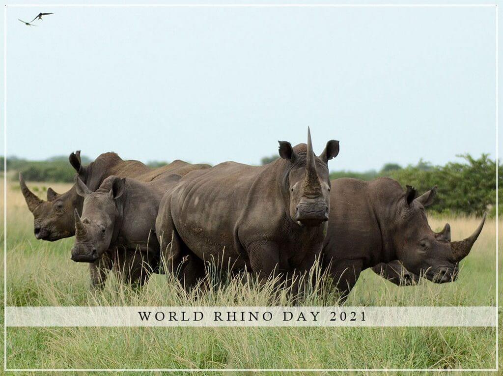 World Rhino Day world rhino day - World Rhino Day THUMBNAIL - World Rhino Day