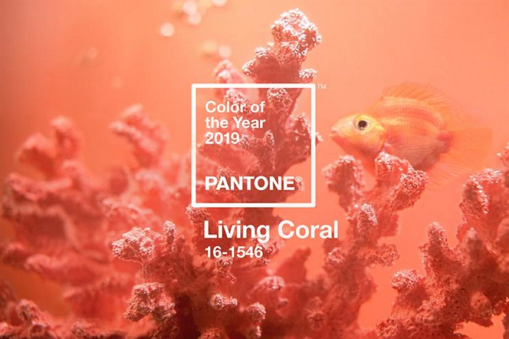 living coral – pantone colour for 2019 LIVING CORAL – PANTONE COLOUR FOR 2019 Picture1