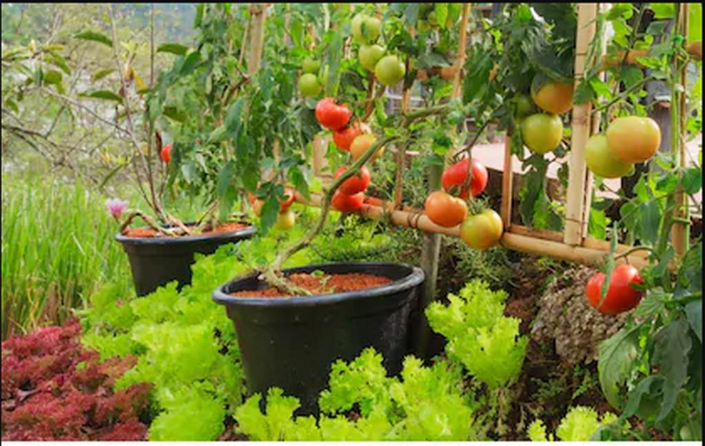 organic terrace farming - ORGANIC TERRACE FARMING     THE KEY TO SELF SUSTENANCE 5 - ORGANIC TERRACE FARMING – THE KEY TO SELF-SUSTENANCE